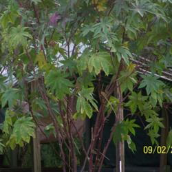 Thumb of 2011-10-03/Riverdolphin/cea1c1