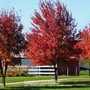 Location: Northeastern IndianaDate: 2011-10-02Young Trees