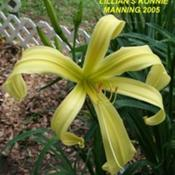 Location: Daylily Place Lillian Alabama Region 14Date: Mid May 2010Photo Courtesy of Fred Manning, Daylily Place. Used Wit