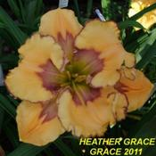 Location: Daylily Place Lillian Alabama Region 14Date: Mid May 2011Photo Courtesy of Fred Manning, Daylily Place. Used With Permissi