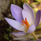 Location: my garden, Gent, BelgiumDate: 2009-10-20