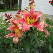 Location: Pleasant Grove, UtahDate: 2009-07-12In a friends garden