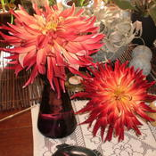 Location: My home - fresh blooms from my gardenDate: 2011-10-15