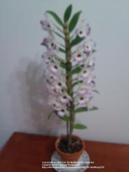 Thumb of 2011-10-17/OrchidKing125/b009a7