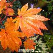 Location: my garden, Gent, BelgiumDate: 2009-10-25