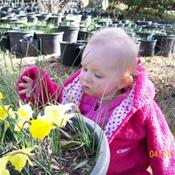 Location: Glenbrook Bulb Farm-TasmaniaDate: august 2010miniatures[molly as well]