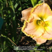 Location: Valley of the Daylilies in Lebanon, OH. Home of Dan and Jackie BachmanDate: 2005-07-11