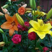 Location: In my garden. Lilies with roses.