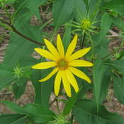 Location: Indiana  Zone 5Date: 2010-08-24