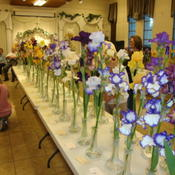 Location: Salt Lake City, UtahDate: 2011-06-07One table in an Iris Show in Utah