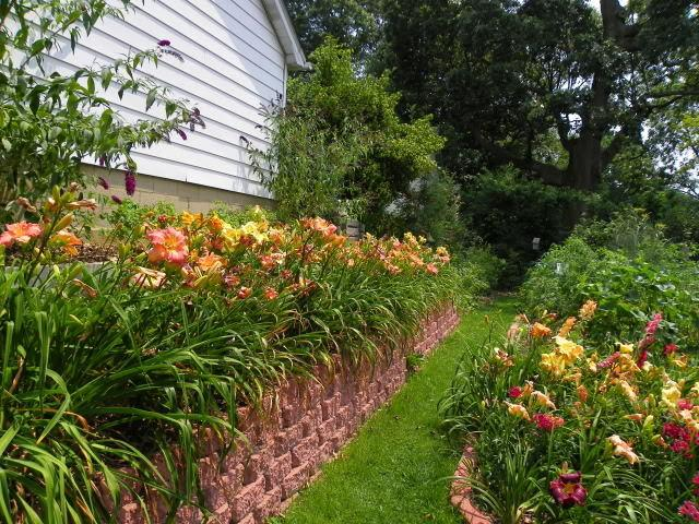 Photo of Daylilies (Hemerocallis) uploaded by Newyorkrita