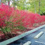 Location: I took this at a Doctor's office near my house.Date: 2011-11-04Great fall color.