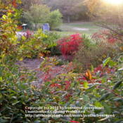 Location: Molly Hollar Wildscape Arlington, Texas.Date: Fall 2010The beautiful colors of Smooth sumac in Fall.
