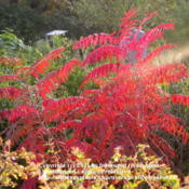 Location: Molly Hollar Wildscape Arlington, Texas.Date: Fall 2010Another view of gorgeous color.
