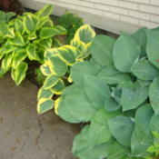 Location: Pleasant Grove, UtahDate: 2011-05-23Hostas