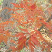 Location: Shade garden Z6aDate: 2011-11-14November color