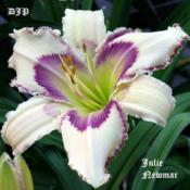 "Location: Fort Worth TxDate: 2010-05-29Daylily (Hemerocallis (""Julie Newmar\"")"