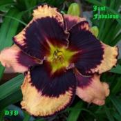"Location: Fort Worth TxDate: 2010-05-20Daylily (Hamerocallis ""Just Fabulous\"")"