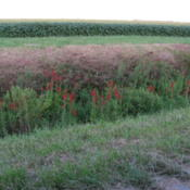 Location: central IllinoisDate: 2009-08-22ditch