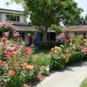 Date: 2008-05-10Rose garden tour in San Jose, CA