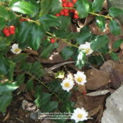 Location: My garden in KentuckyDate: 2004-04-02