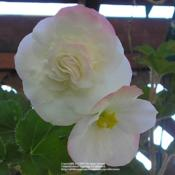 Location: In my Northern California gardenDate: 2009-09-22
