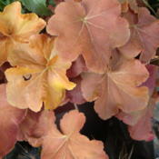 Location: Sunriver Nursery, Orem, UtahDate: 2011-12-03Late fall color