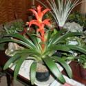 A How-To Guide for Propagating Bromeliads