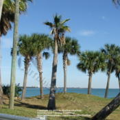 Location: West coast of FLDate: 2006-01-25We were on vacation on the west coast of FL when this w
