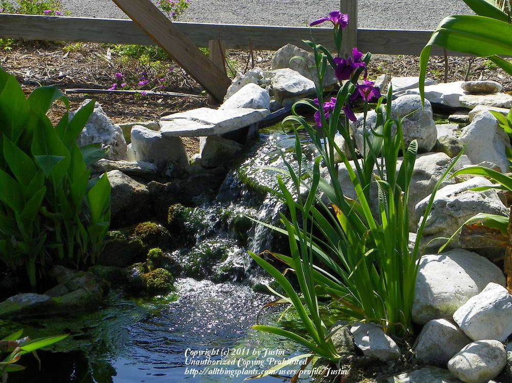 Ponds and Water Gardening forum: Pond - South Texas Botanical ...