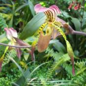 Location: Tropical greenhouse, BelgiumDate: 2007-08-24