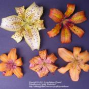 Location: Willamette Valley OregonDate: Summer 2009Bottom: Plum Peach, Momentous, Pendant Peach. Top: Stun