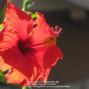 Location: Daytona Beach, FloridaDate: December 25, 2011Christmas Day Bloom