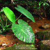 Location: by a river, rainforest Paraty, BrazilDate: 2010-02-18