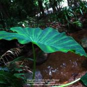 Location: by a river, rainforest Paraty, BrazilDate: 2010-01-24