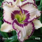 "Location: Fort Worth TXDate: 2010-06-01Daylily ""Lacy Lucy\"""