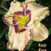 "Location: Fort Worth TXDate: 2009-06-15Daylily ""Lacy Lucy\"""