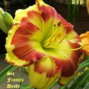 "Location: Fort Worth TXDate: 2009-06-20Daylily ""Sir Francis Drake\"""