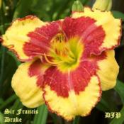 "Location: Fort Worth TXDate: 2009-05-27Daylily ""Sir Francis Drake\"""