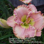 One of my favorite daylilies!