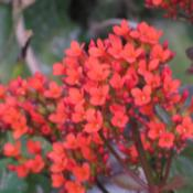 Location: Southwest FloridaDate: winter 2009Red is one of the most common colors in which this plan