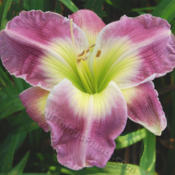 Photo courtesy of Marietta Daylily Gardens