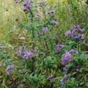 Location: Meadowland In Northeastern Indiana - Zone 5bDate: 2011-09-26