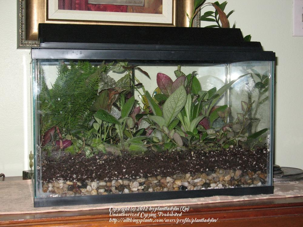 How to turn an aquarium into a terrarium wow for Fish tank terrarium