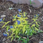 Location: Denver Metro CODate: October 2009bad picture showing the brilliant yellow