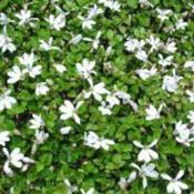 Image Courtesy of Bloomin Designs Nursery Used with Per