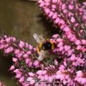 January Plants for Honey Bees