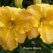 "Location: Fort Worth TxDate: 2009-05-30Daylily ""Empire Queen\"""
