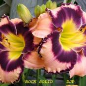 "Location: Fort Worth TxDate: 2008-06-04Daylily ""Rock Solid\"""