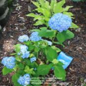 Location: VirginiaDate: 2011-05-27Third round of flowers
